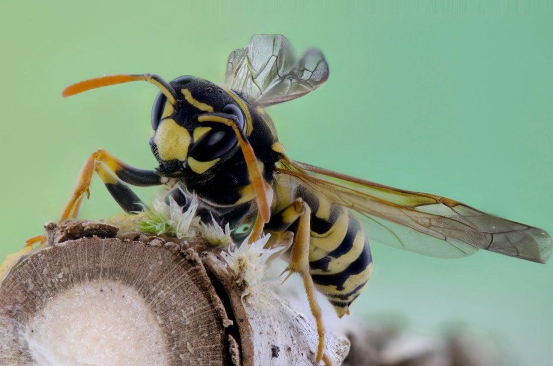 Queen bitch bee