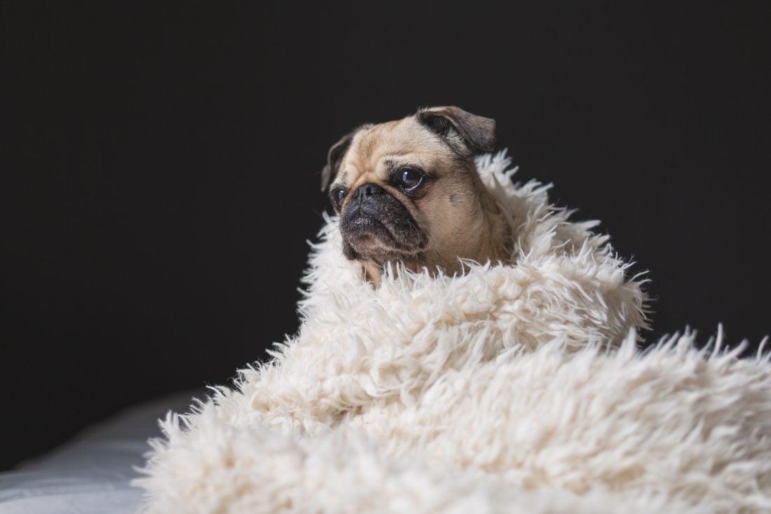 breakup sad dog